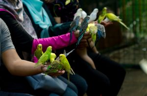 4 Jenis Burung yang Mudah Dipelihara dan Jinak