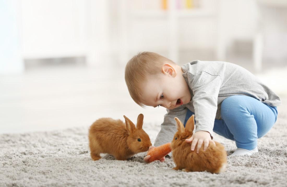 Hewan-hewan Lucu untuk Dipelihara