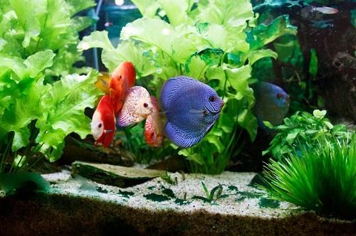hewan peliharaan ikan
