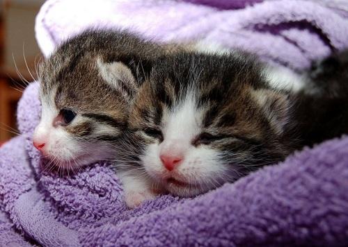 hewan peliharaan kucing